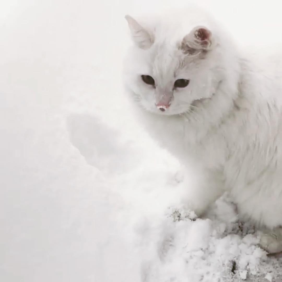 beyaz kedi isimleri