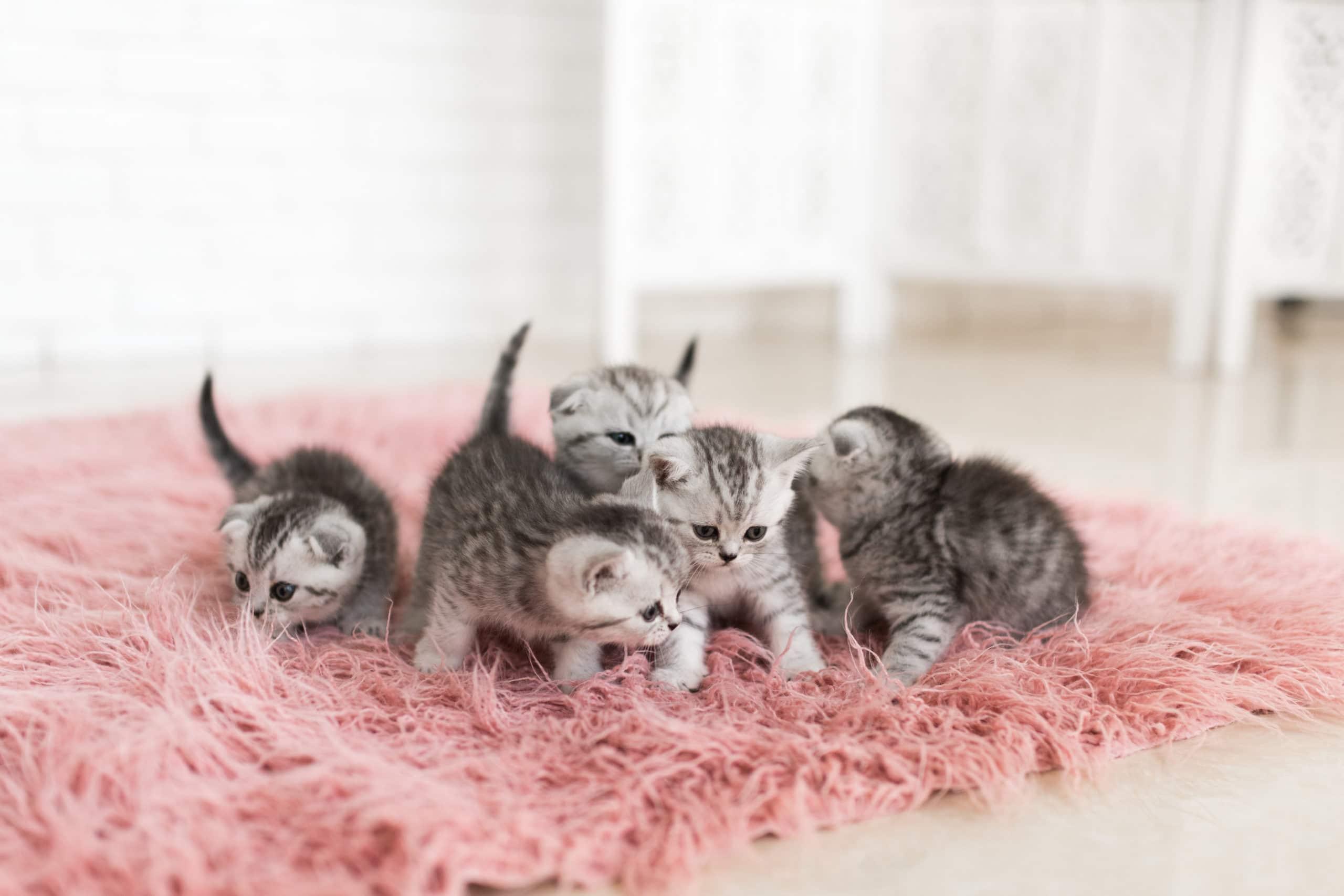 Kedi İhtiyaçları