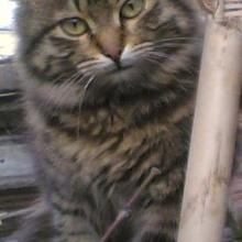 pakizee Profile Picture