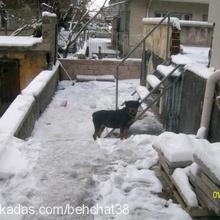 sumak--Çalindi Profile Picture