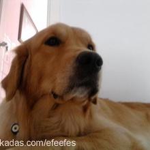 efes Profile Picture