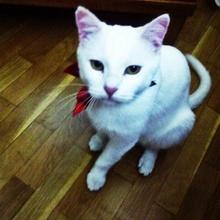 pamuk Profile Picture