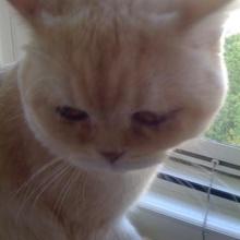 tonton Profile Picture