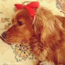 daisy Profile Picture