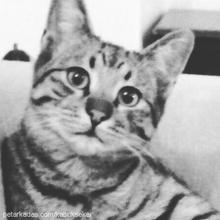 ponçik Profile Picture