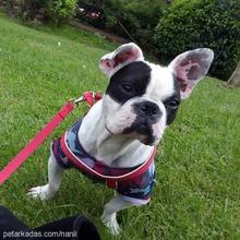 nani Profile Picture