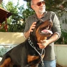 mustafa köngül Profile Picture