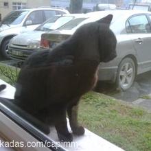 kuki aşkım Profile Picture