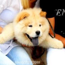 -EŞ- GÜLLEP Profile Picture