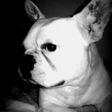 özcan alışar Profile Picture