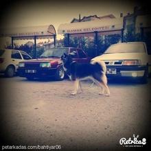 Enes galip Demirtaş Profile Picture
