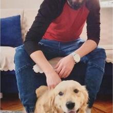 lassie Profile Picture