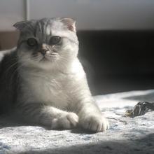 luna Profile Picture