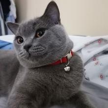 gece Profile Picture