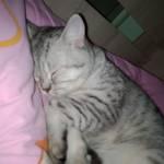 Kediannesii12 Profile Picture