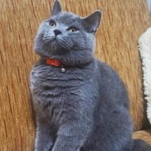 herkul Profile Picture