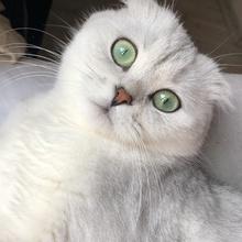 minnie Profile Picture