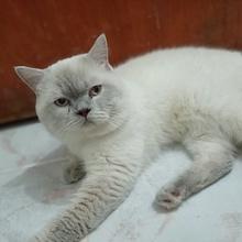 mudur-2 Profile Picture