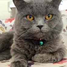 yoda Profile Picture