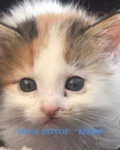 1 aylık yavru kedi
