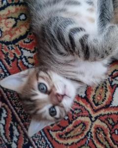yavru kedi yuva arıyorum
