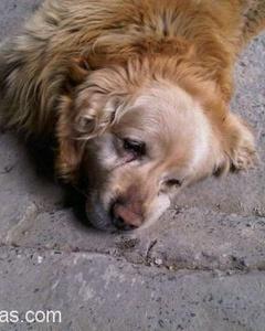 Aile\'Ye \'Bebek\' Gelince, \'Köpek\' Otoparka Terk Edilmiş\'\', İstanbul