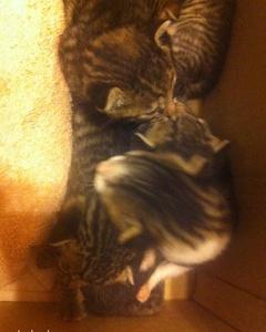 Lütfen Yardım Edin Nolur Terkedilen 15 Günlük 5 Kedi Yavrusu.., Antalya