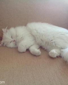 Kedimi Sahiplendirmek İstiyorum, İzmir
