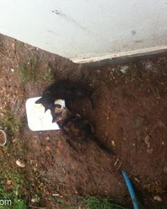 Tek Gözü Patlamış Yavrusarman Kedi Ona Kucak Açmanızı Bekliyor, Antalya