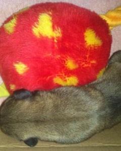 Acil! 1 Haftalık Köpek İçin Süt Anne Veya Geçici Yuva Aranıyor!, İzmir