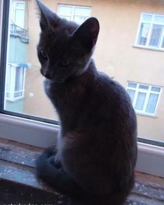 Kedimiz Artık Yeni Evinde :) Sahiplendirilmiştir, Ankara