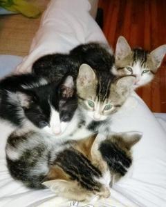4 Adet Kedi, Bursa