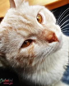 1 Yaşında Kısırlaştırılmamış Erkek Kedi Acil Kalıcı Yuva, İstanbul