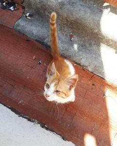 Üç Aylık Yavru Erkek Kedi, İstanbul