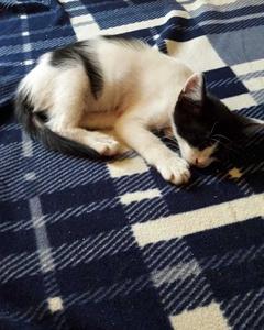 Yeni Sıcak Yuvasını Arayan Yavru Kedimiz<3