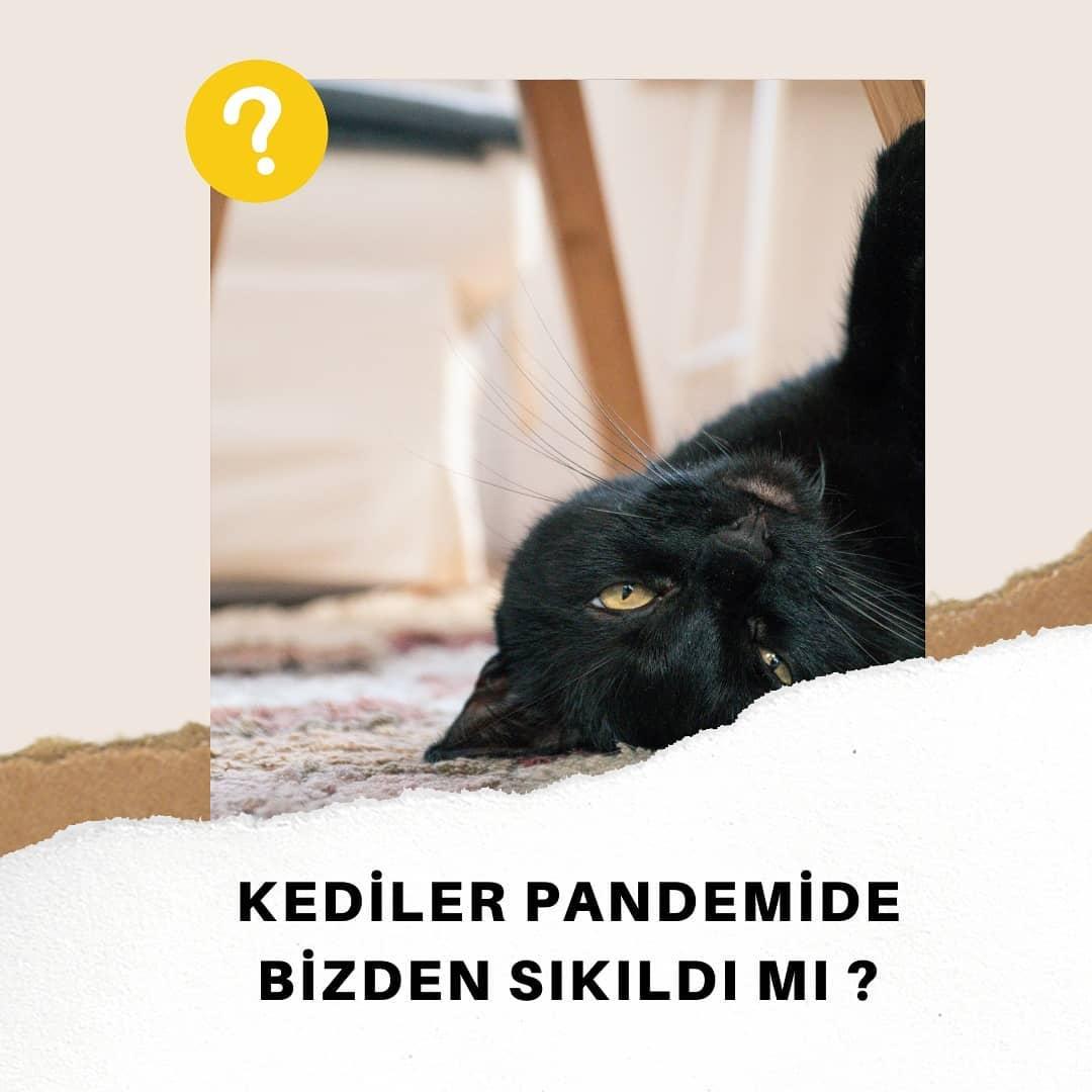 Sürekli evde olmamız kedilerimizi nasıl etkiliyor?