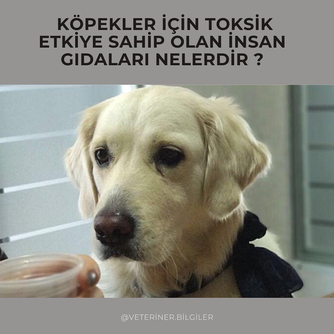 Köpeklere zararlı ürünler nelerdir