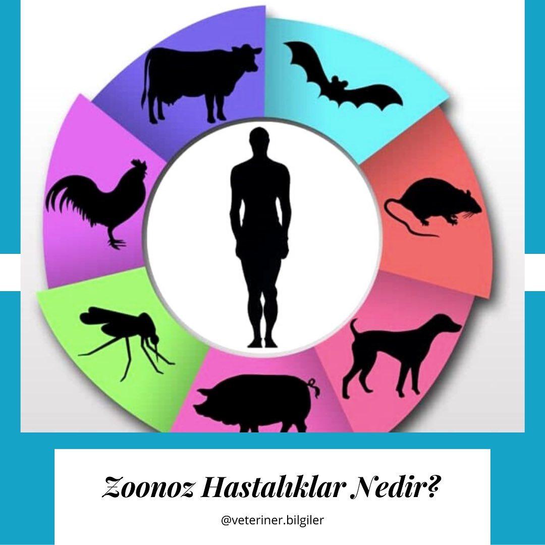 Zoonoz Hastalıklar Hayvanlardan Insanlara Veya Insanlardan hayvanlara