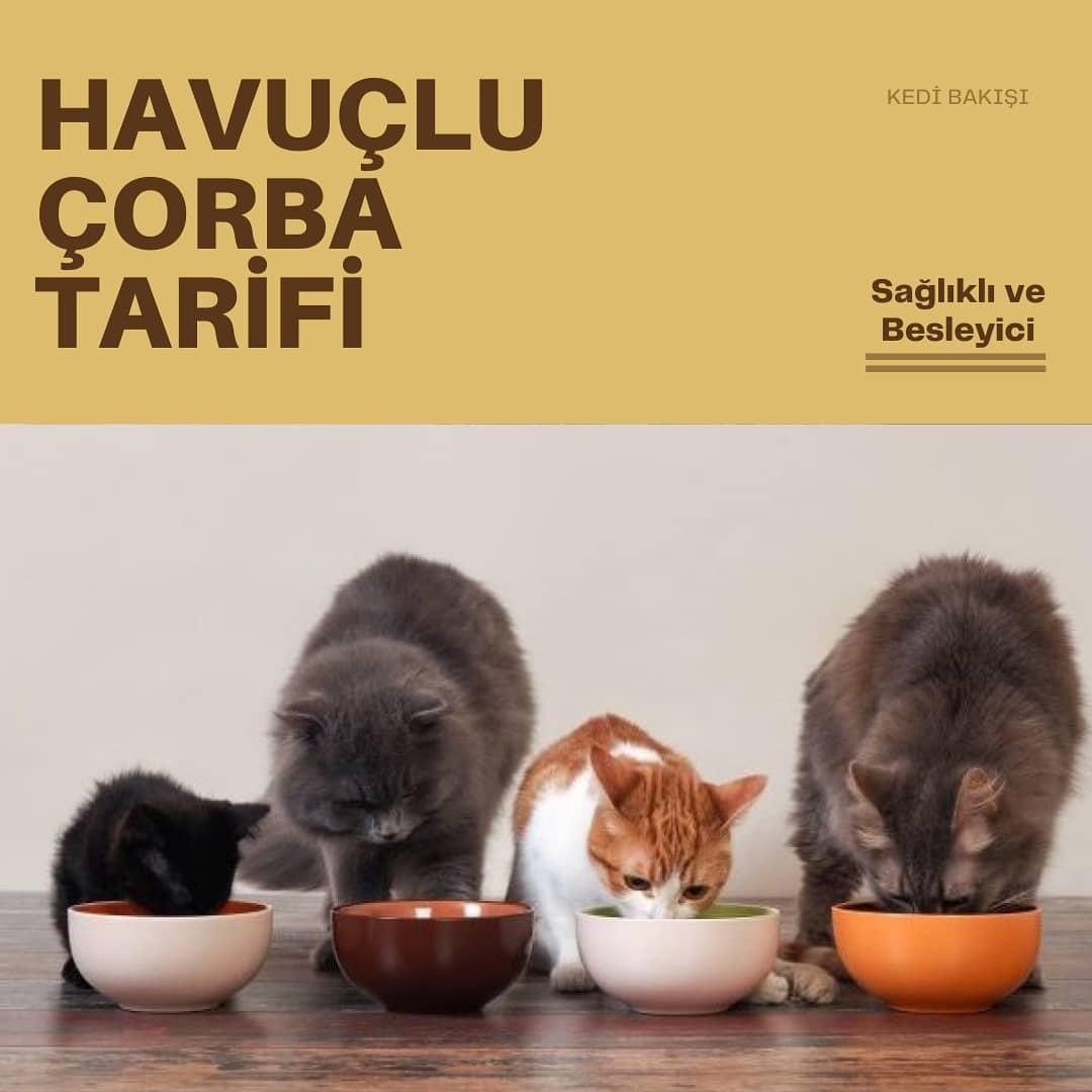 Kediler için Havuç Çorbası Tarifi