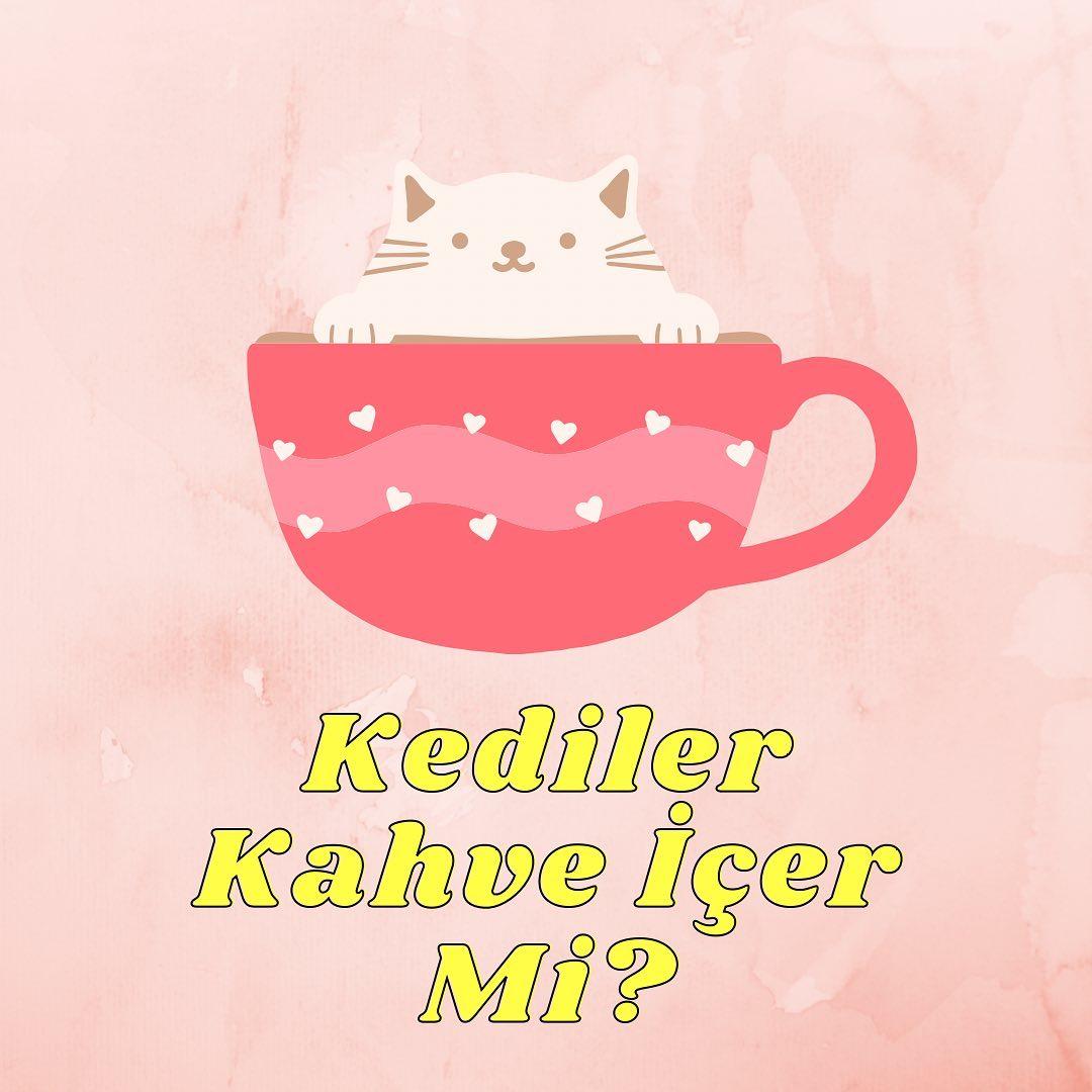 Kediler kahve içer mi?