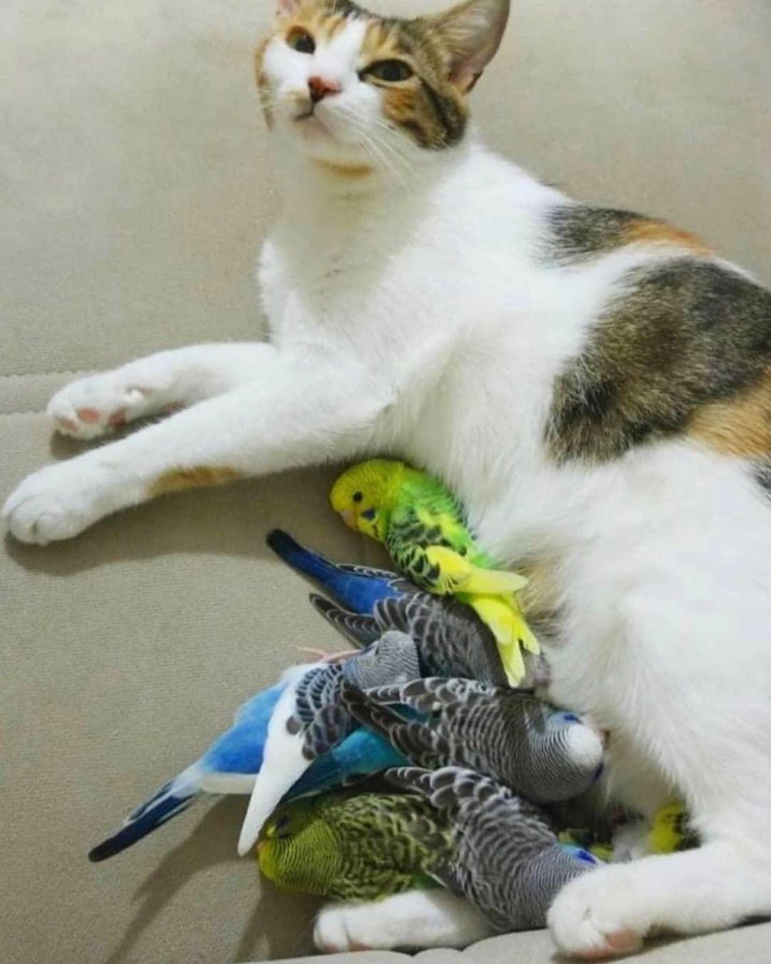 Kedi Ve Kuş Aynı Evde Yaşayabilir mi?