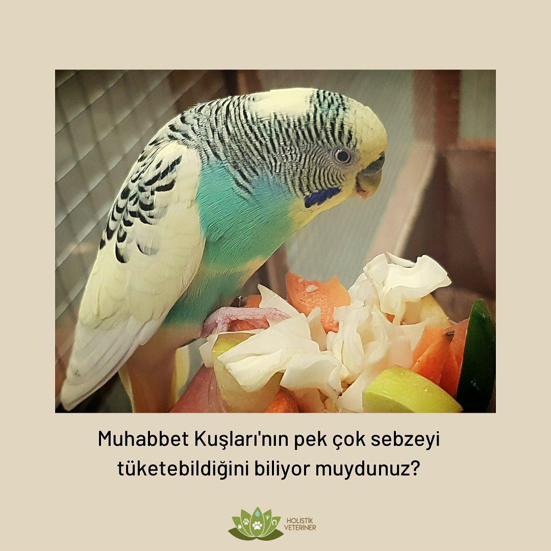 Muhabbet Kuşları Hangi Sebzeleri Yer?