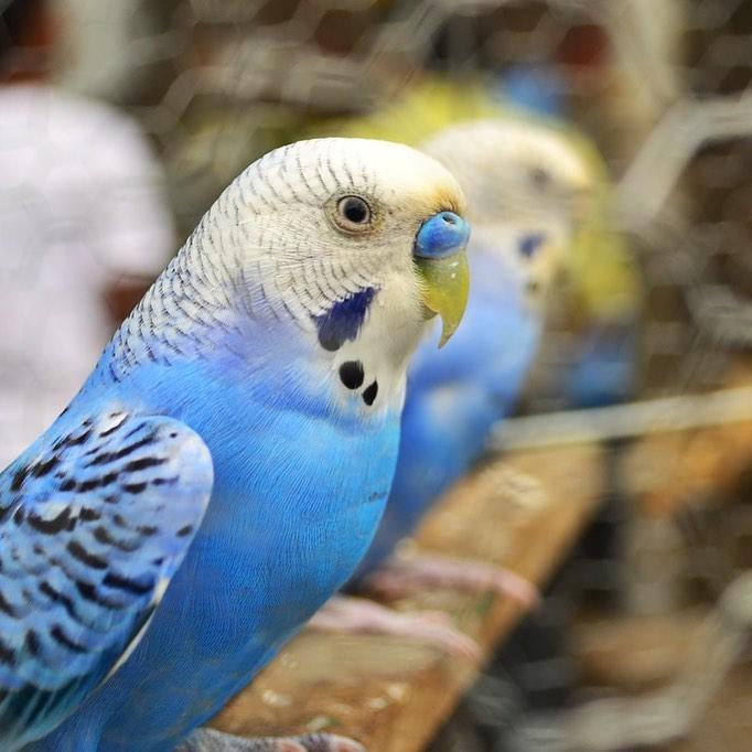 Kuşlarda İshal