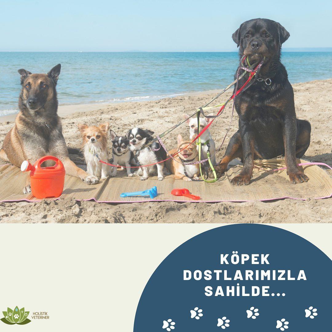 Sahilde Köpeklerimiz Için Nelere Dikkat Etmeliyiz?