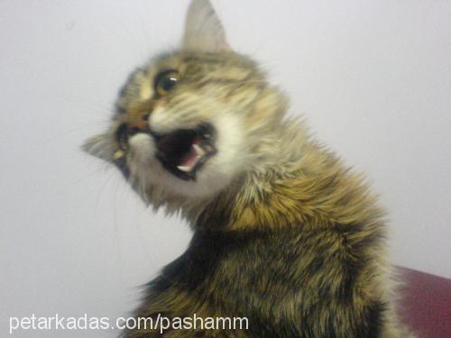 zarife profile picture