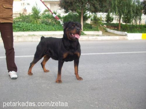 zeta profile picture