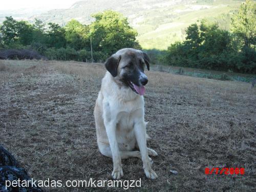 alaş Profile Picture