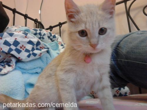 minnoş Profile Picture