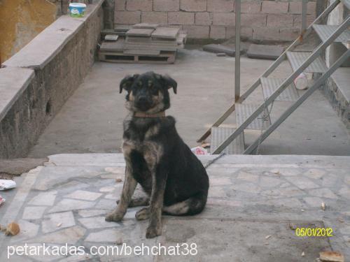 bobo--çalındı Profile Picture