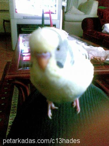 osman Profile Picture